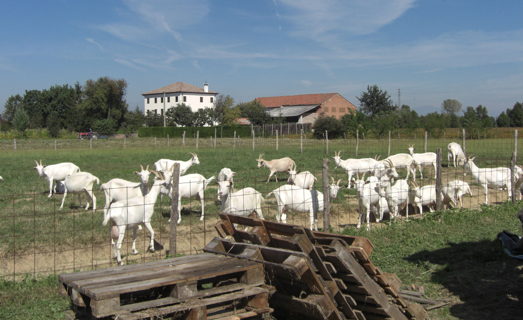 """Caseificio biologico """"La Capreria"""" (Vicenza)"""
