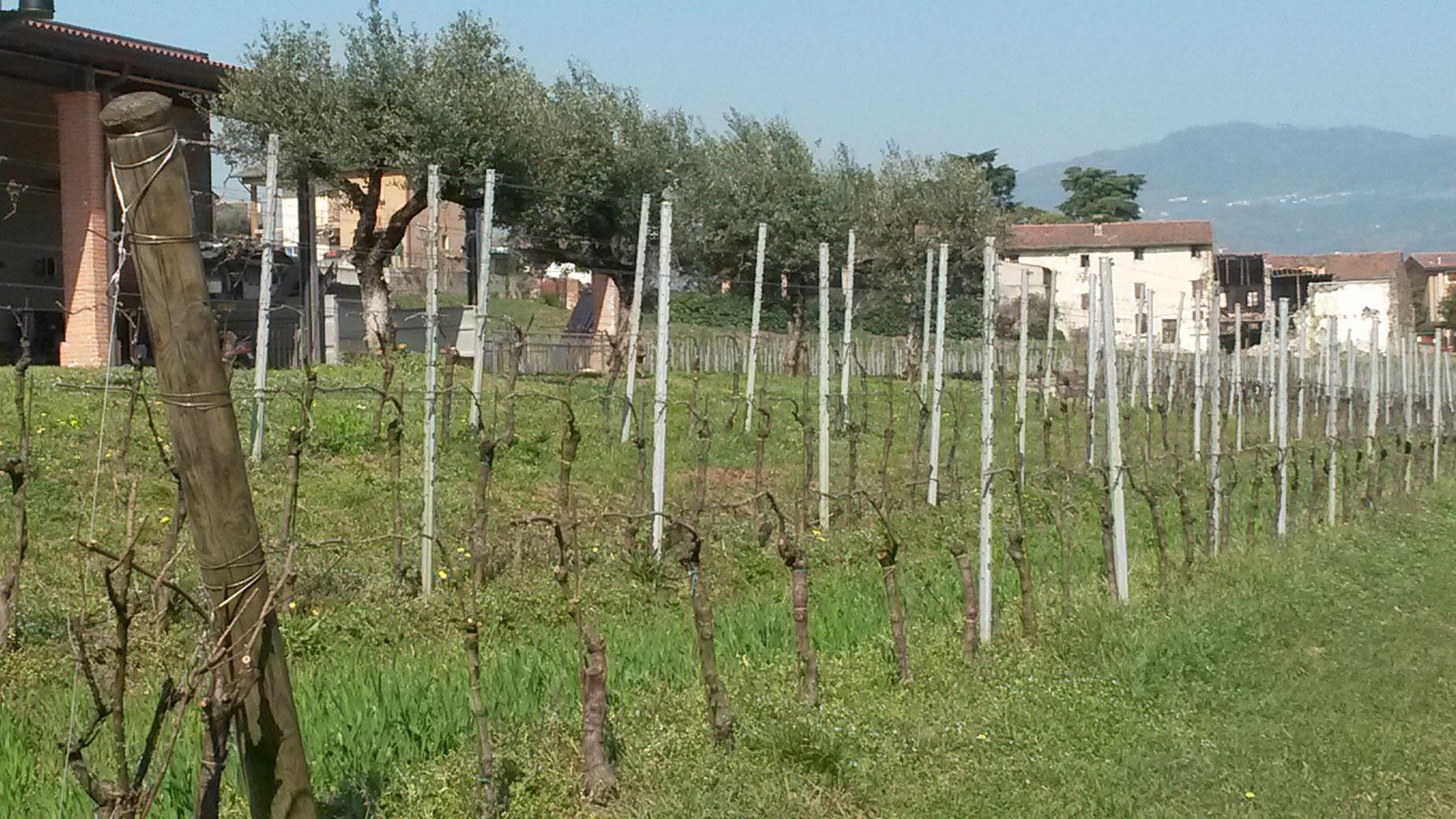 Cantina biologica La Cappuccina (Verona)